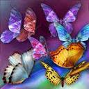لعبة جمع الفراشات